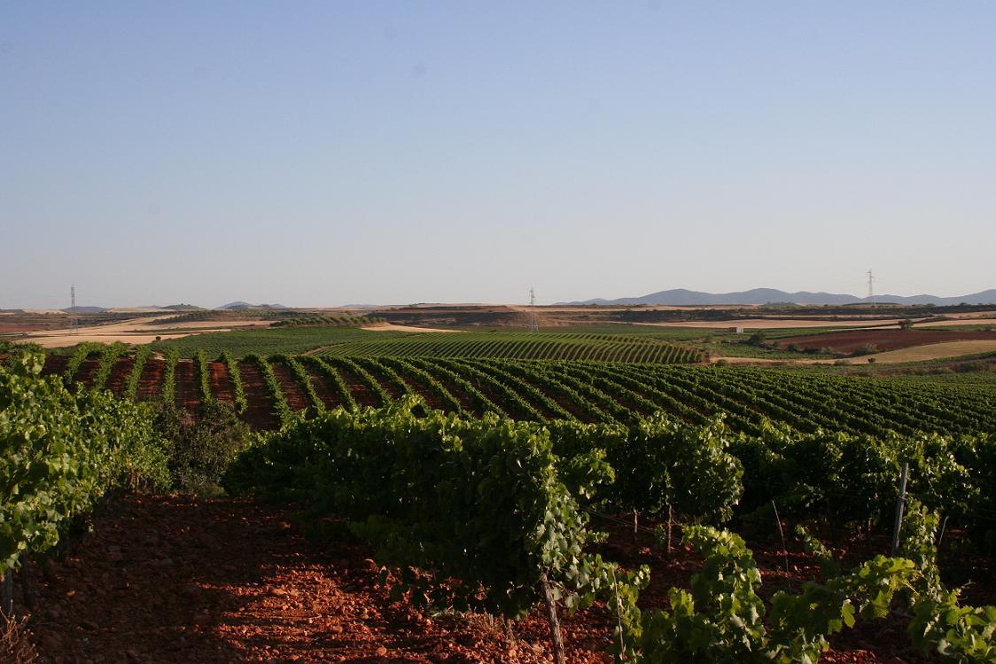 II Congreso Internacional sobre la Traducción del Lenguaje Especializado de la Vid y el Vino